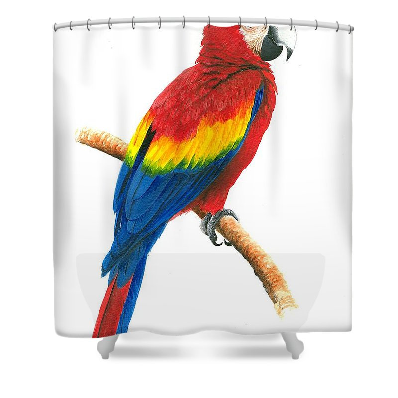 Chris Cox Shower Curtain featuring the painting Scarlet Macaw by Christopher Cox
