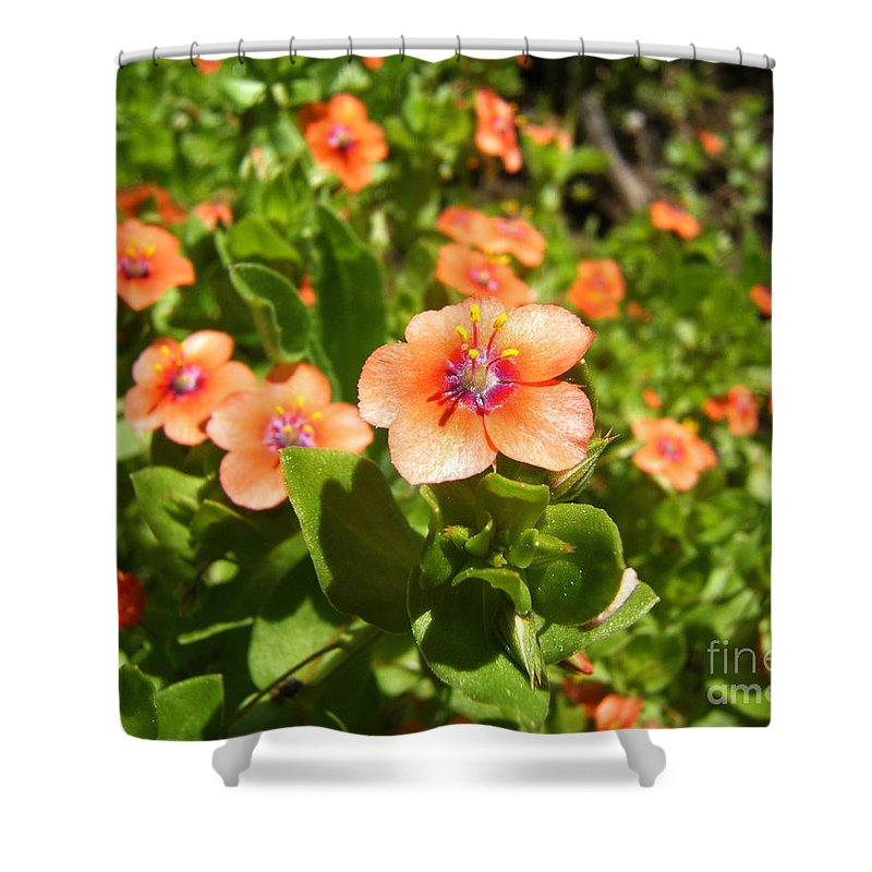 Artoffoxvox Shower Curtain featuring the photograph Scarlet Pimpernel Flower Photograph by Kristen Fox