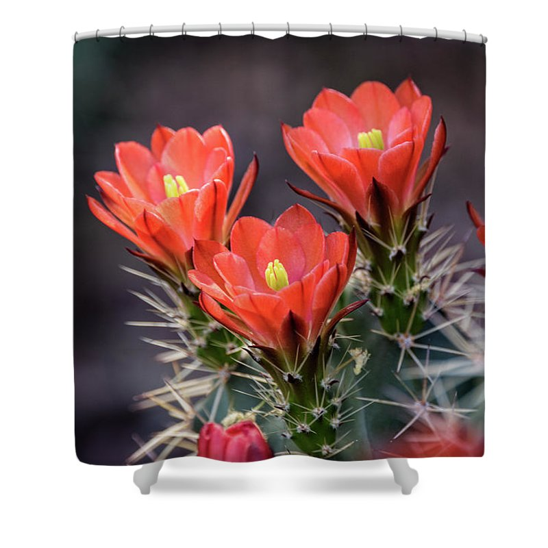 Scarlet Hedgehog Cactus Shower Curtain featuring the photograph Scarlet by Saija Lehtonen