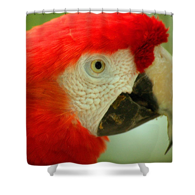 Parrot Shower Curtain featuring the photograph Scarlett Macaw South America by Ralph A Ledergerber-Photography