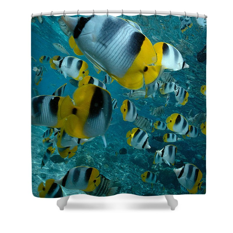 Animal Art Shower Curtain featuring the photograph School Of Butterflyfish by Bob Abraham - Printscapes
