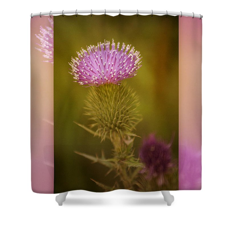 Floral Shower Curtain featuring the photograph Scotch Thistle by Holly Kempe