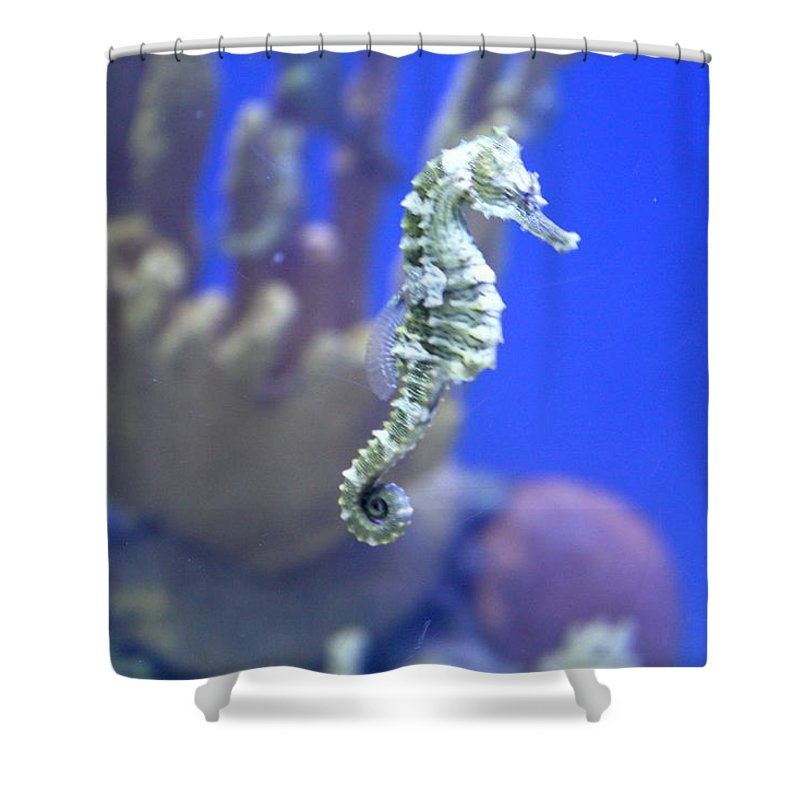 Shower Curtain featuring the photograph Sea Horse by Teresa Doran