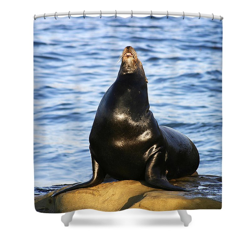 Sea Lion Shower Curtain featuring the photograph Sea Lion Sing by Anthony Jones