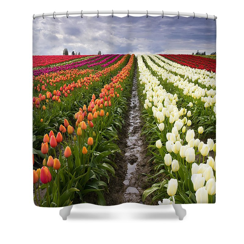 Tulips Shower Curtain featuring the photograph Sea Of Color by Mike Dawson