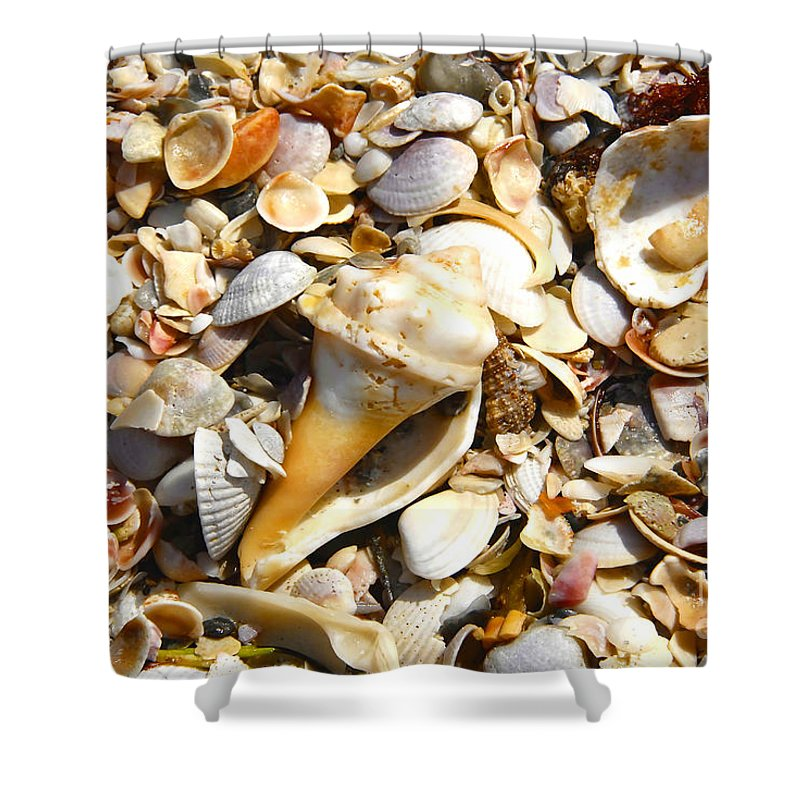 Florida Shower Curtain featuring the photograph Sea Shells by David Lee Thompson