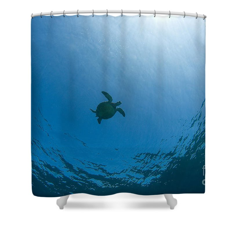 Animal Art Shower Curtain featuring the photograph Sea Turtle Silhouette by Dave Fleetham - Printscapes