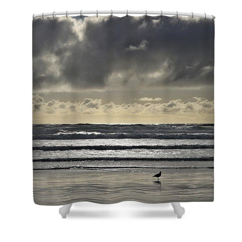 Seagull At Cannon Beach Shower Curtain featuring the photograph Seagull At Cannon Beach by Wes and Dotty Weber