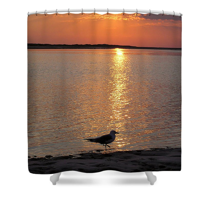 Seagull Shower Curtain featuring the photograph Seagull At Sunset by Charles Harden