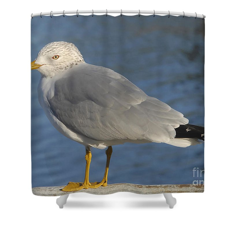 Seagull Shower Curtain featuring the photograph Seagull by David Lee Thompson