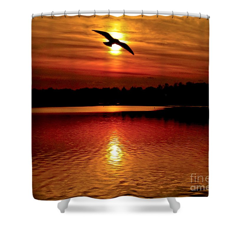 Sunset; End Of Day; Homeward Bound; Home; Journey; Setting Sun; Golden Hour; Magic Hour;vibrant Shower Curtain featuring the photograph Seagull Homeward Bound by Carol F Austin