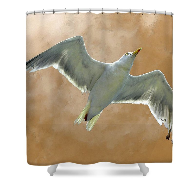 Seagull Shower Curtain featuring the photograph Seagull In Flight 1 by Mark Sellers