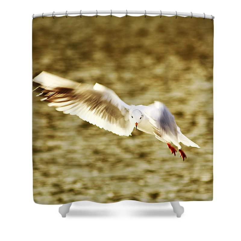 Seagull Shower Curtain featuring the photograph Seagull In Flight by Chris Wharmby
