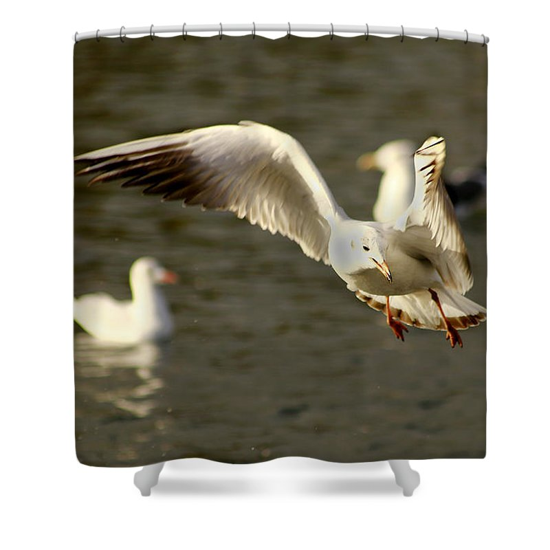 Seagull Shower Curtain featuring the photograph Seagull Manoeuvers by Chris Wharmby