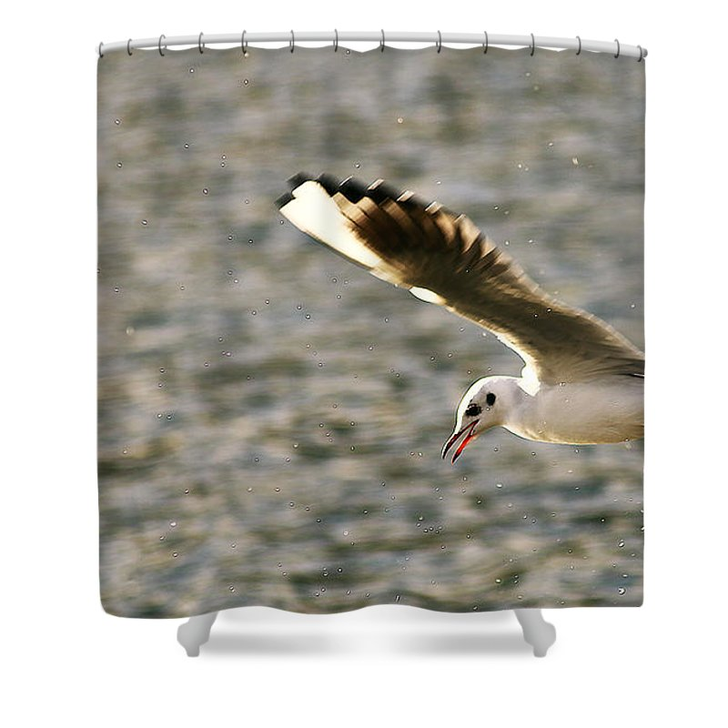 Seagull Shower Curtain featuring the photograph Seagull Over Water by Chris Wharmby