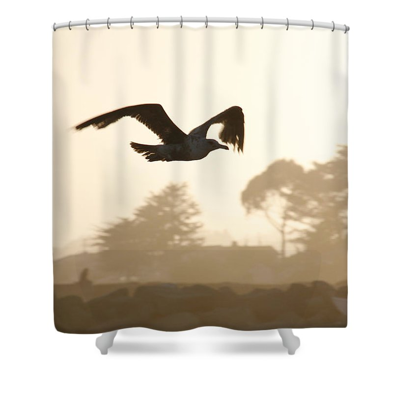 Bird Shower Curtain featuring the photograph Seagull Sihlouette by Marilyn Hunt