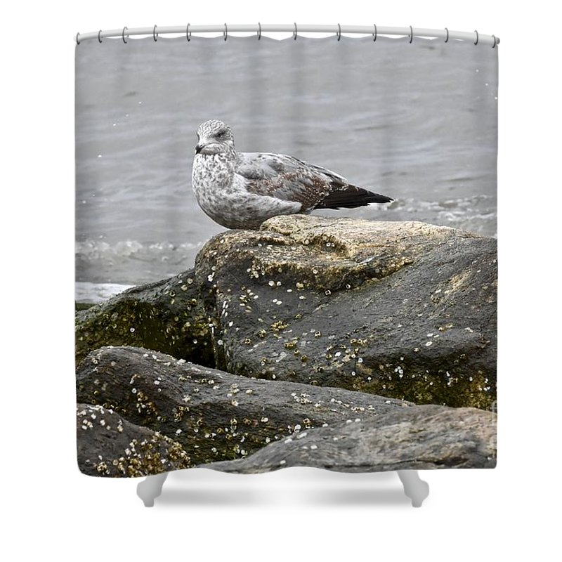 Animal Behavior Shower Curtain featuring the photograph Seagull Sitting On Jetty by Jeramey Lende