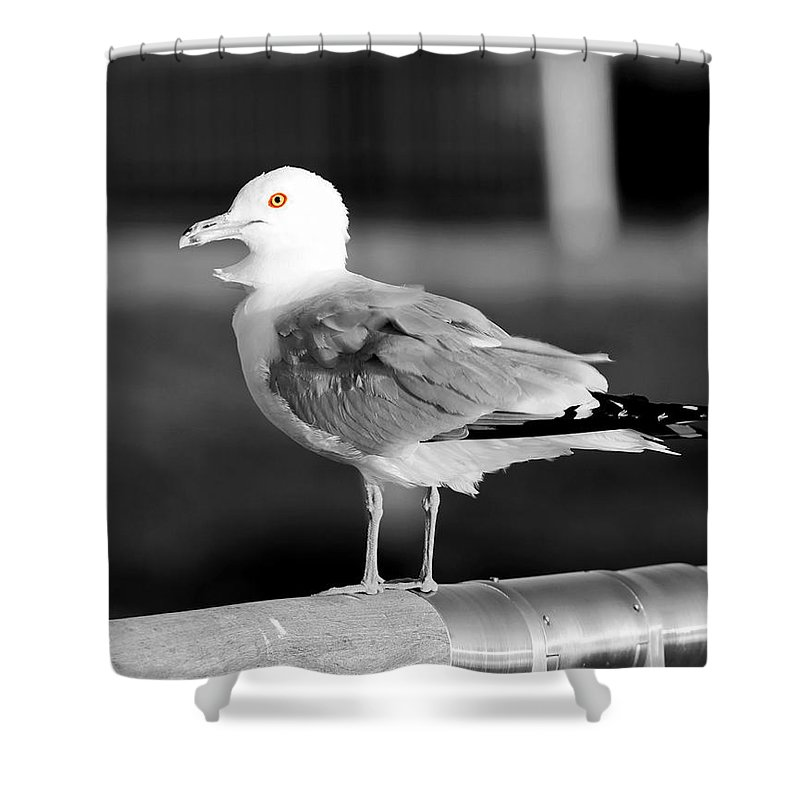 Seagulls Shower Curtain featuring the photograph Seagull by Steve Bell