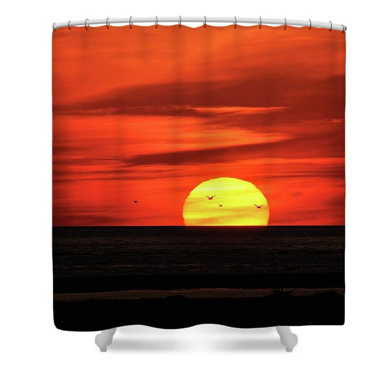 Seagull Shower Curtain featuring the photograph Seagull Sunset by Al Powell Photography USA