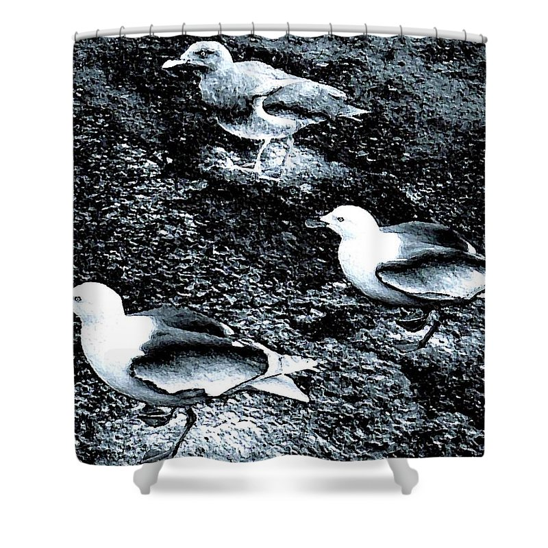 Seagulls Shower Curtain featuring the digital art Seagull Trio by Will Borden