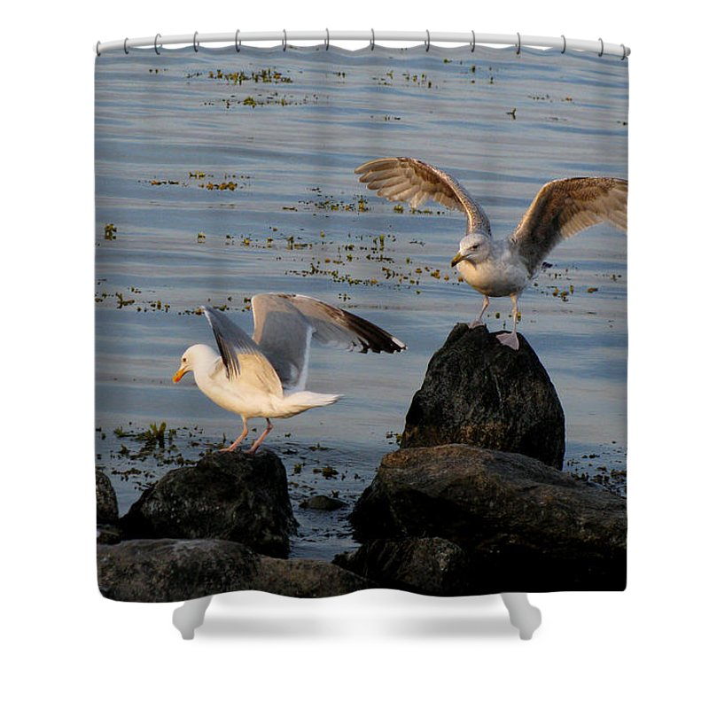 Birds Shower Curtain featuring the photograph Seaguls 3 by Cristina Rettegi