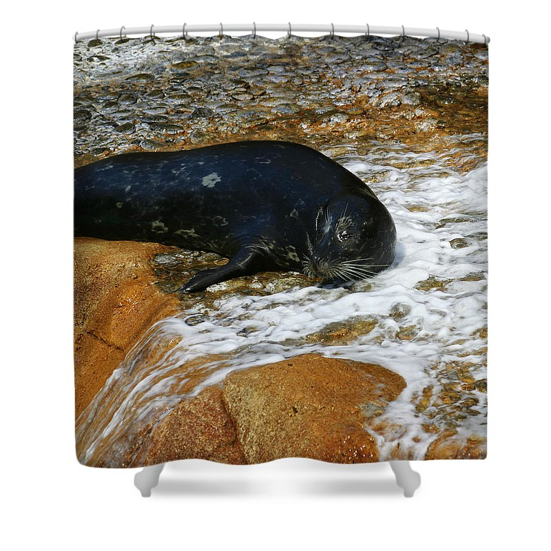 Seal Shower Curtain featuring the photograph Seal by Anthony Jones