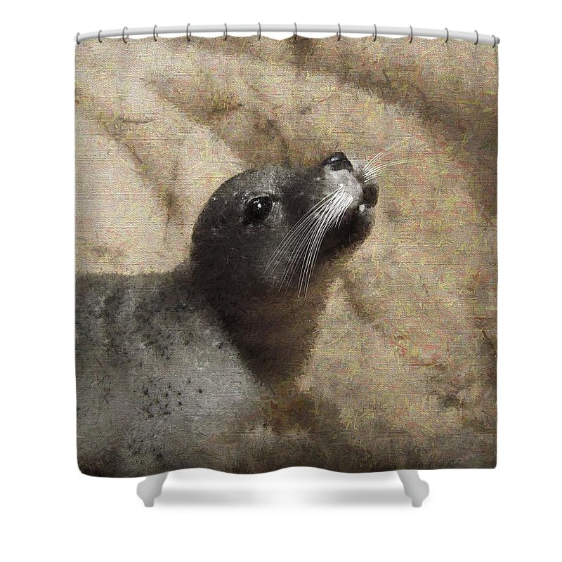 Seal Shower Curtain featuring the photograph Seal With A Kiss by Shannon Story