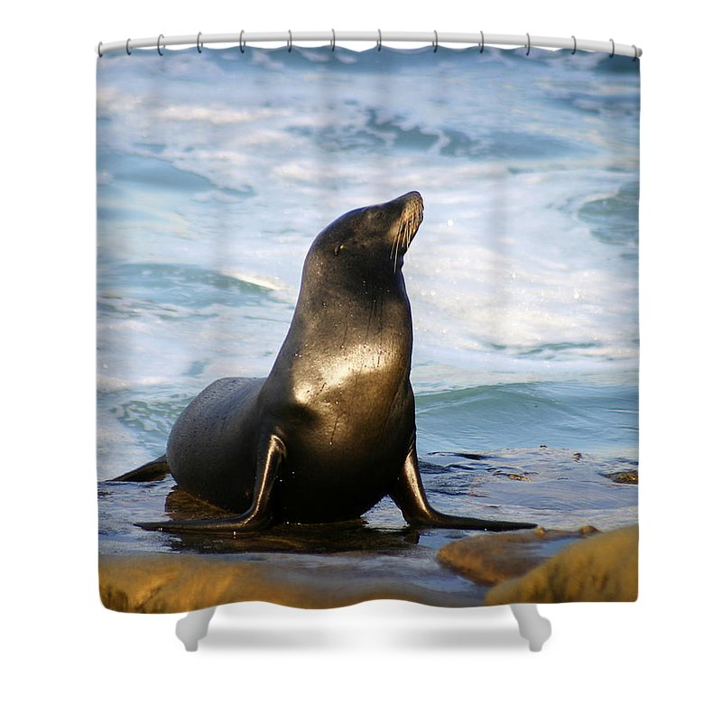 Sealion Shower Curtain featuring the photograph Sealion by Anthony Jones
