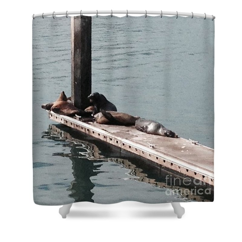Seals Shower Curtain featuring the photograph Seals At Oceanside by Laurie Lundquist
