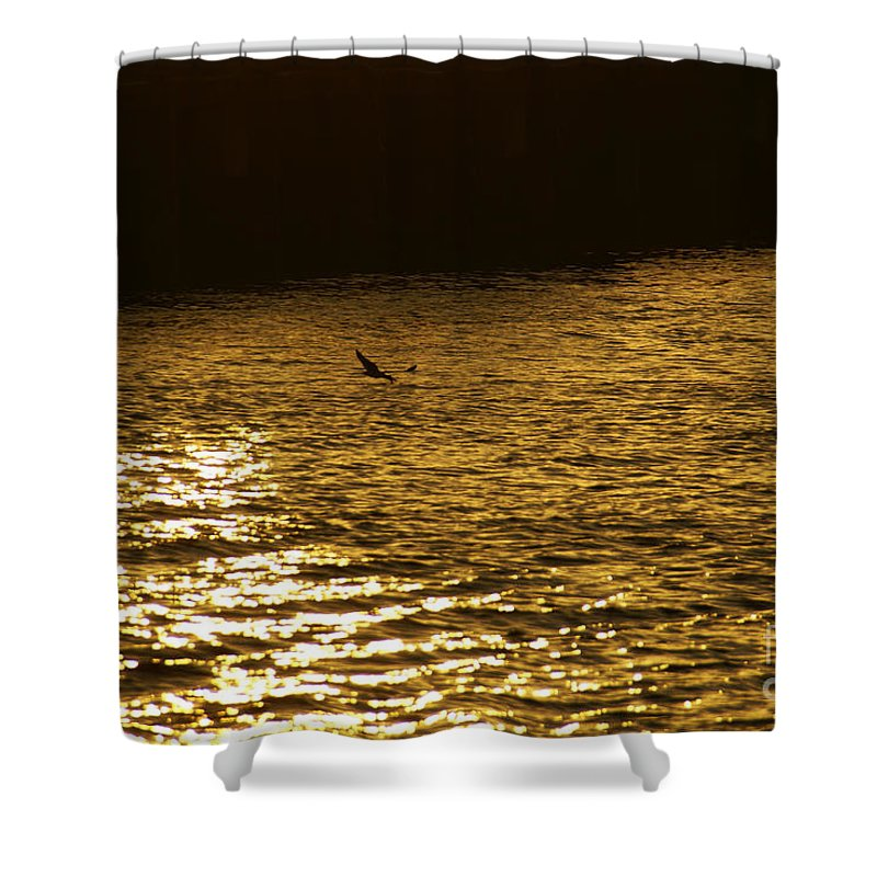 Ocean Shower Curtain featuring the photograph Searching by Linda Shafer