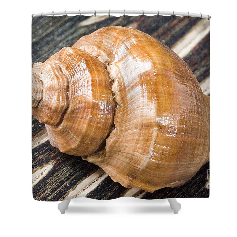 Beach Art Shower Curtain featuring the photograph Seashell by Bill Brennan - Printscapes