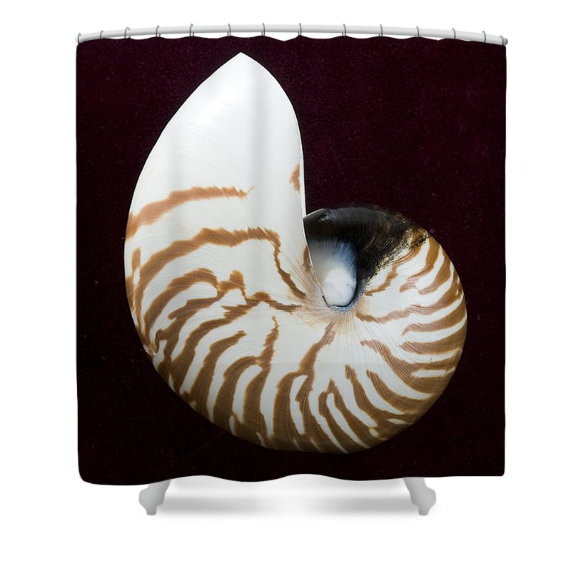 Beach Art Shower Curtain featuring the photograph Seashell On Black Background by Bill Brennan - Printscapes