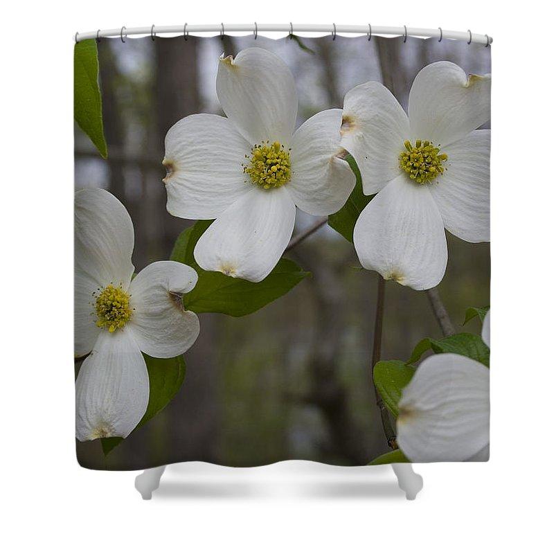 Flower Shower Curtain featuring the photograph Season Of Dogwood by Andrei Shliakhau