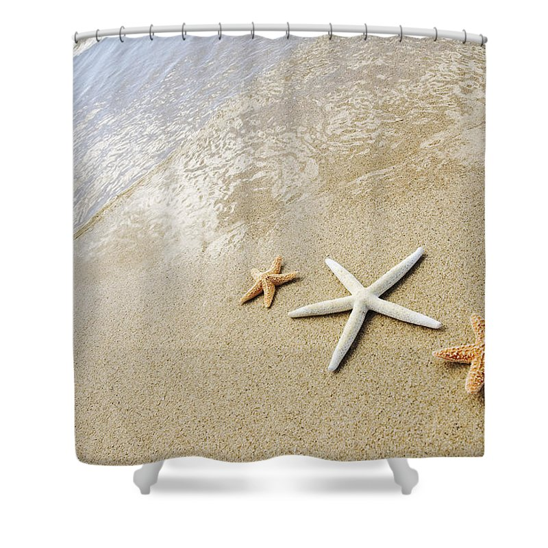 Afternoon Shower Curtain featuring the photograph Seastars On Beach by Mary Van de Ven - Printscapes