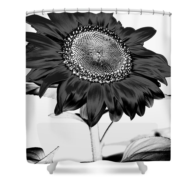 Black And White Photography Shower Curtain featuring the photograph Seattle Sunflower Bw Invert - Stronger by Heather Kirk