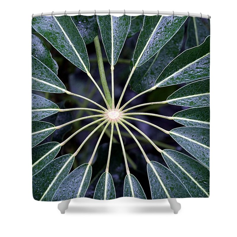 Plant Shower Curtain featuring the photograph Secret by Mitch Cat