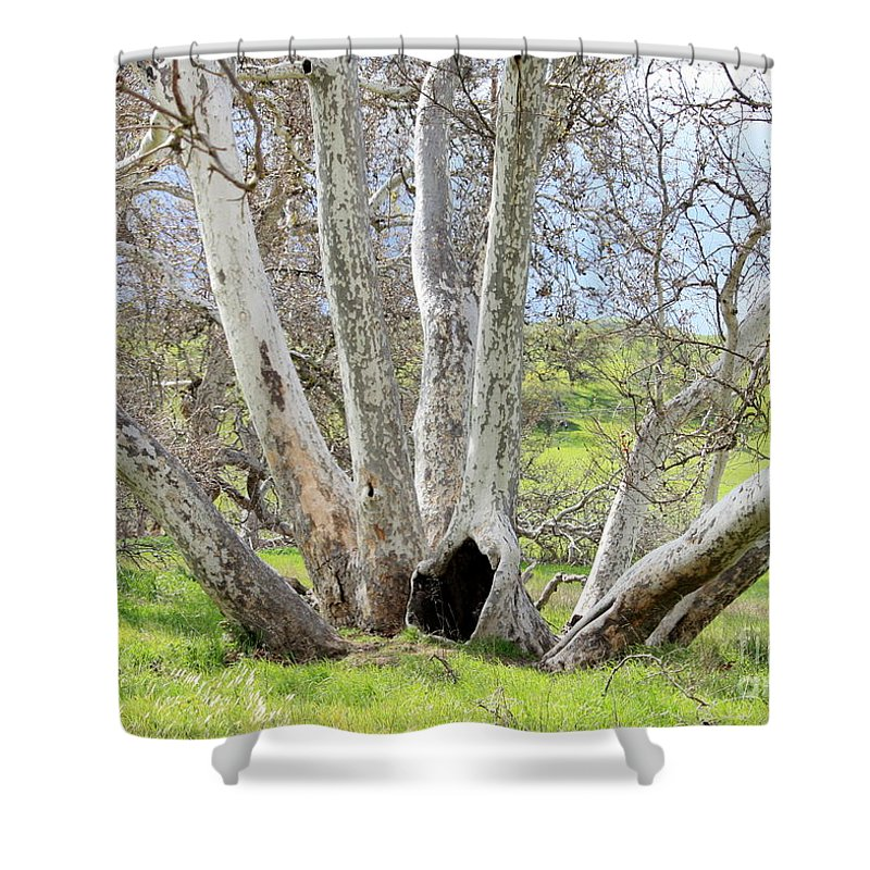 Tree Shower Curtain featuring the photograph Secret Passageway by Carol Groenen