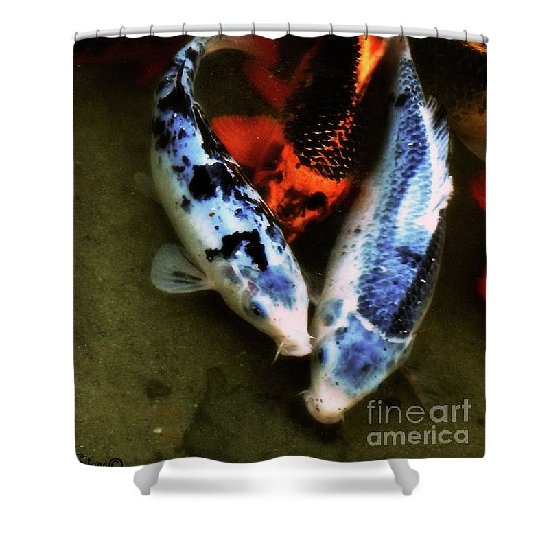 Koi Shower Curtain featuring the photograph Secrets Of The Wild Koi 10 by September Stone