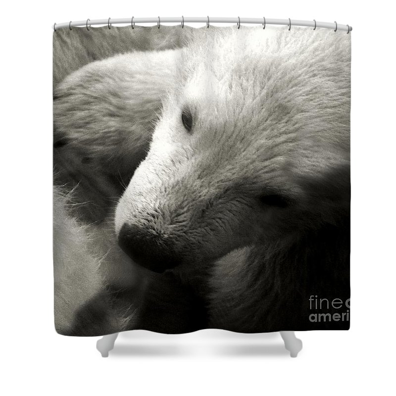 Polar Bear Shower Curtain featuring the photograph Security Blanket by RC DeWinter