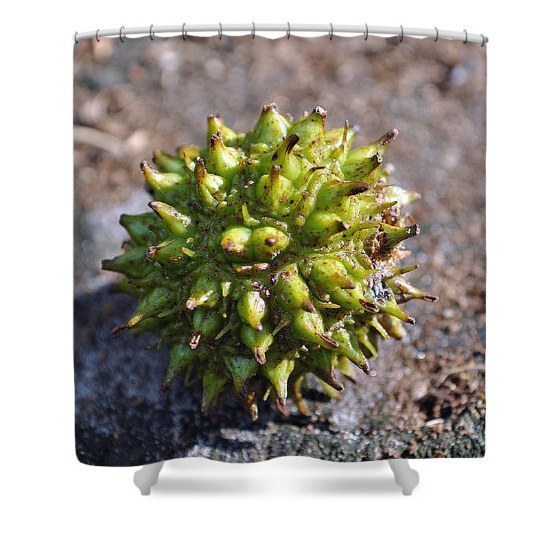 Tree Shower Curtain featuring the photograph Seed Capsule by Kenneth Albin