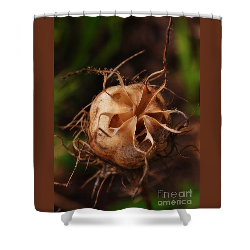 New England Shower Curtain featuring the photograph Seed Vase by Virginia Levasseur