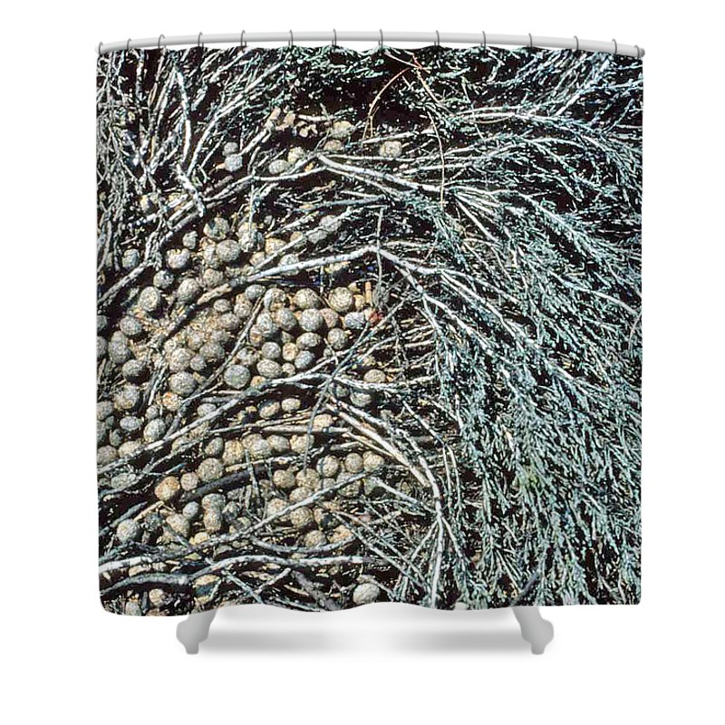 Seeds Shower Curtain featuring the photograph Seeds Of The Sea by Laurie Paci