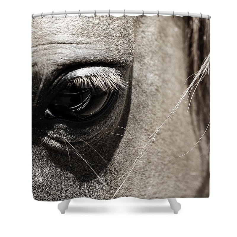 Americana Shower Curtain featuring the photograph Stillness In The Eye Of A Horse by Marilyn Hunt