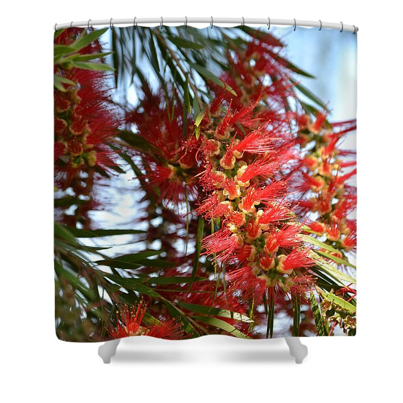 Callistemon Shower Curtain featuring the photograph Seeing Red by Denise Jakob