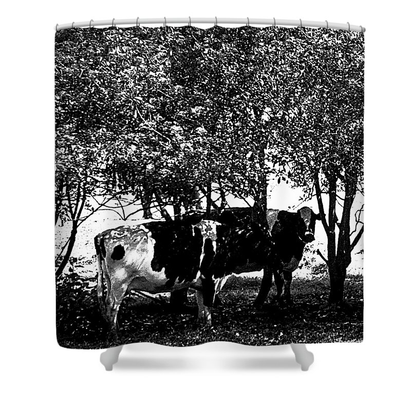 Cows Shower Curtain featuring the photograph Seeking Shade 2 by David Patterson