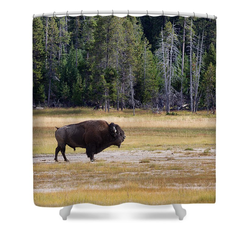 Bison Shower Curtain featuring the photograph Senior North Amercian Bull Buffalo by Thomas Baker