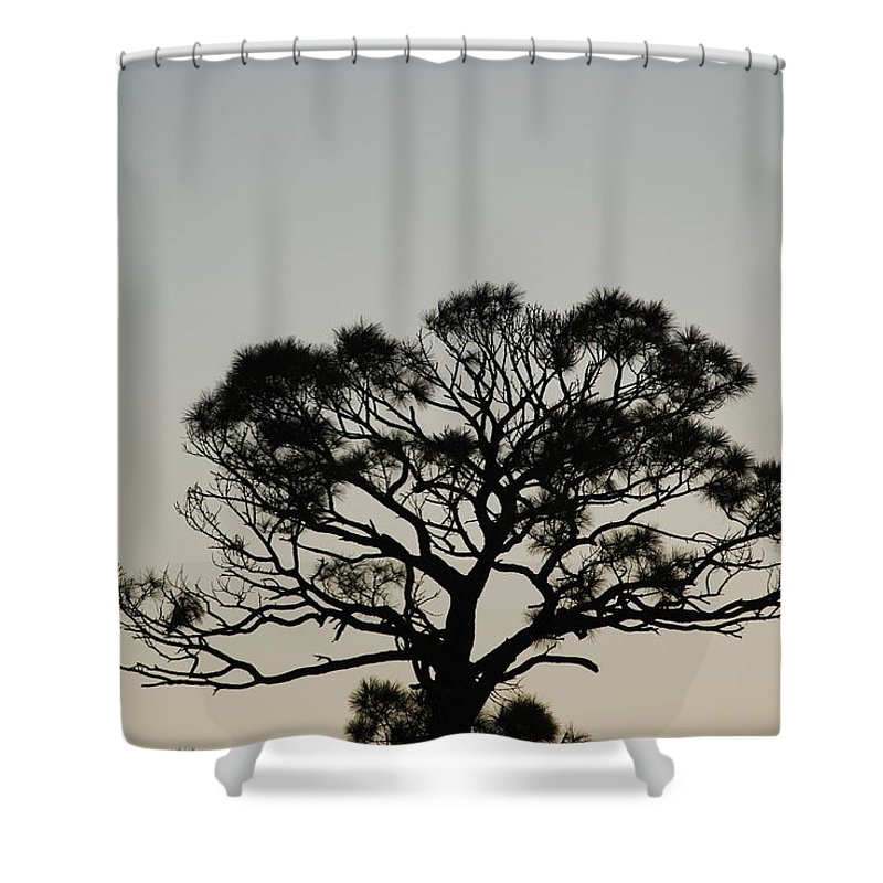 Tree Shower Curtain featuring the photograph Senset Trees by Rob Hans