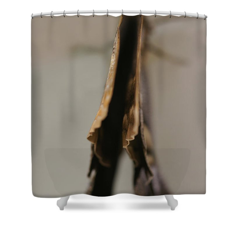 Butterfly Shower Curtain featuring the photograph Sensitive Dependence by Linda Shafer