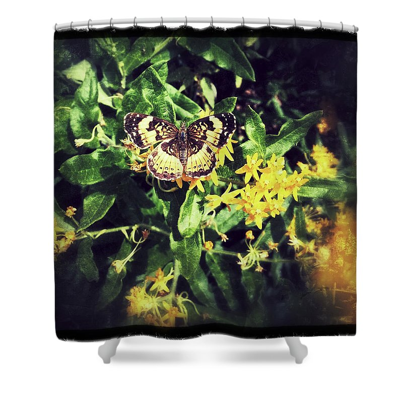 Butterfly Insect Flowers Shower Curtain featuring the photograph Sepia Butterfly by Rachel Crozier