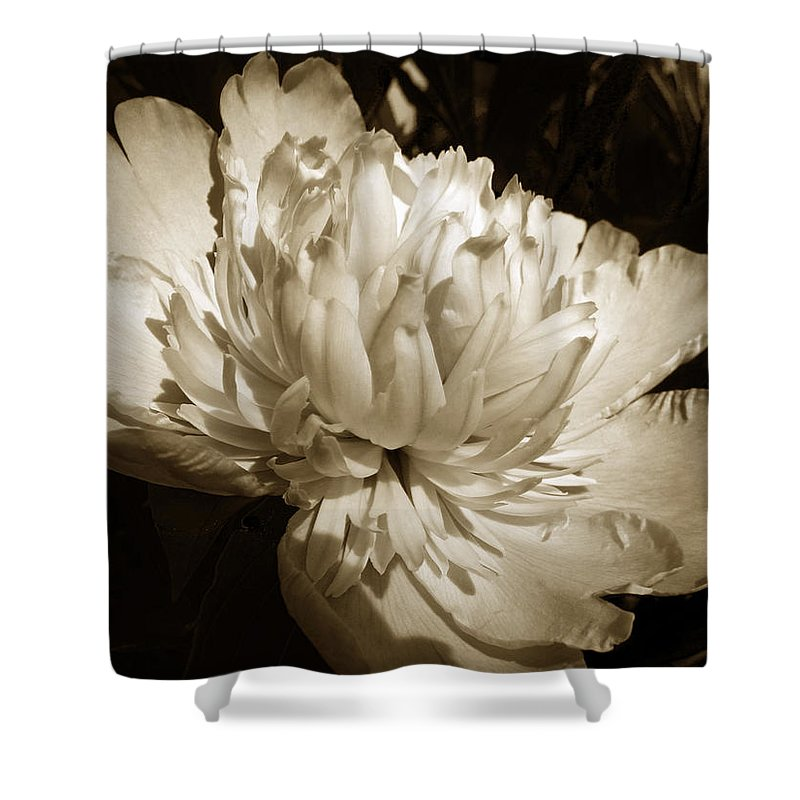 Peony Shower Curtain featuring the photograph Sepia Peony Flower Art by Christina Rollo